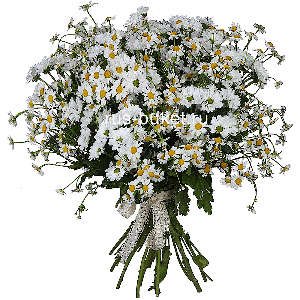 Buy Flowers Daisies Uzbekistan Russian Flowers Order And Delivery